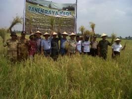 Direktur Utama PT BMH Jonatan Ginting, Kepala Badan ketahanan pangan Provinsi Sumsel Amrozi, Asisten II setda OKI H Rosidi, dan pejabat lain turut panen padi bersama