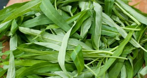 kangkung-si-hijau-sehat-yang-ampuh-singkirkan-bau-mulut