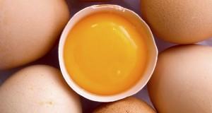 kini-tak-ada-lagi-alasan-untuk-menyingkirkan-kuning-telur