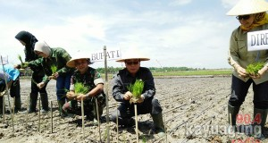 dinas-pertanian-oki-dan-kodim-0402-oki-oi-adakan-pekan-tanam-akhir-musim-1